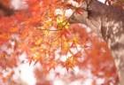 南禅寺の紅葉2018見ごろ時期と紅葉狩りスポットはココ!