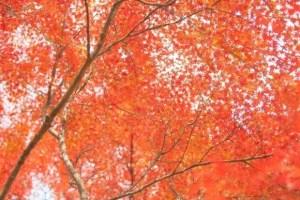 八ヶ岳高原の紅葉2017の見頃時期と紅葉狩りはココがおススメ!