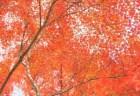 八ヶ岳高原の紅葉2018の見頃時期と紅葉狩りはココがおススメ!