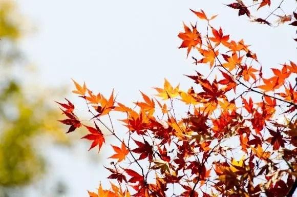 鎌倉の紅葉2017見頃と穴場の紅葉狩りスポットはココ!