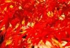 香嵐渓の紅葉2018のライトアップや見頃時期と紅葉狩りはココ!