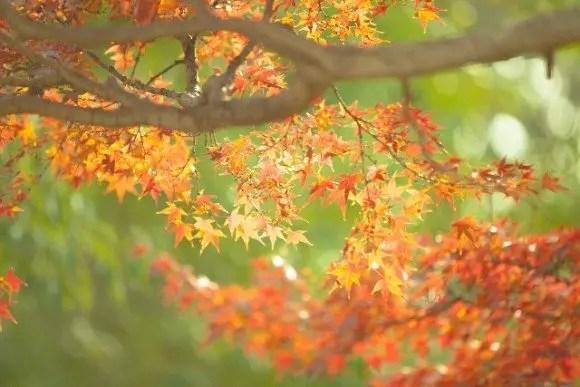 那須高原の紅葉2017の見ごろ時期と紅葉狩りスポットはココ!
