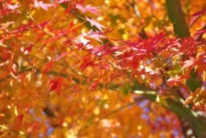 京都の紅葉とライトアップの名所や見頃の時期2017!