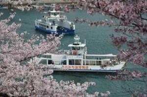広島の桜・花見の名所や穴場おすすめ10選と開花情報2017!