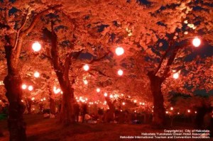北海道の夜桜ライトアップの名所や穴場スポット10選!