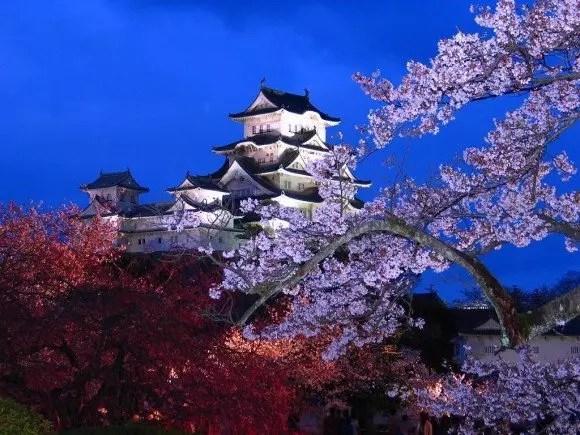 兵庫の夜桜ライトアップの名所や穴場スポット10選!