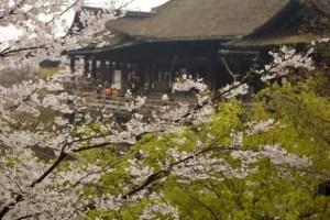 京都の桜・花見の名所や穴場おすすめ10選と開花情報2017!