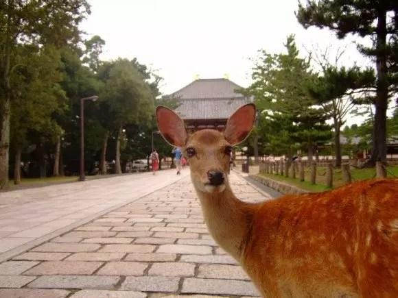 奈良でお土産を買うならコレ【絶対喜ばれるランキング】