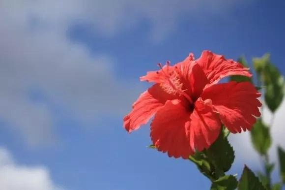 沖縄でお土産を買うならコレ【絶対喜ばれるランキング】
