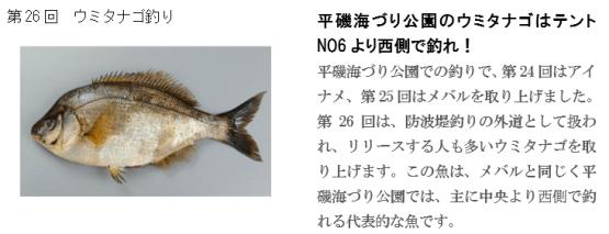釣り ホームページ(26)