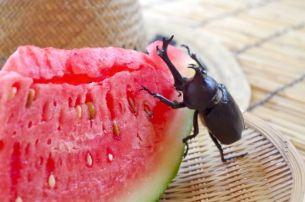 蚊取り線香 成分 人体