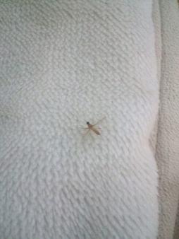蚊 絶滅 したら
