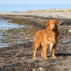 1. oktober må du slippe hunden fri på stranden