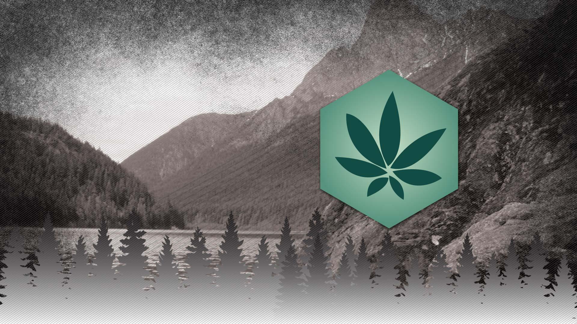 Skagit Organics Recreational Cannabis +21 Honey Wax Vape Dab Flower