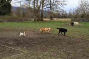 Skagit County Dogs Bark Park