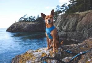 Skagit County Dogs Deception Pass