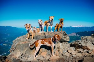 Skagit County Dogs Sauk Mountain