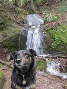 Hikes with waterfalls Skagit County with Roxie