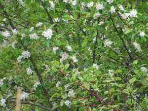 Skagit County Walks to See Spring Blooms Port of Skagit
