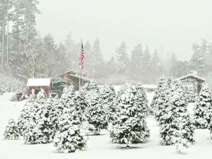 Christmas Tree Farms Skagit County Pacific Winds Farm 1
