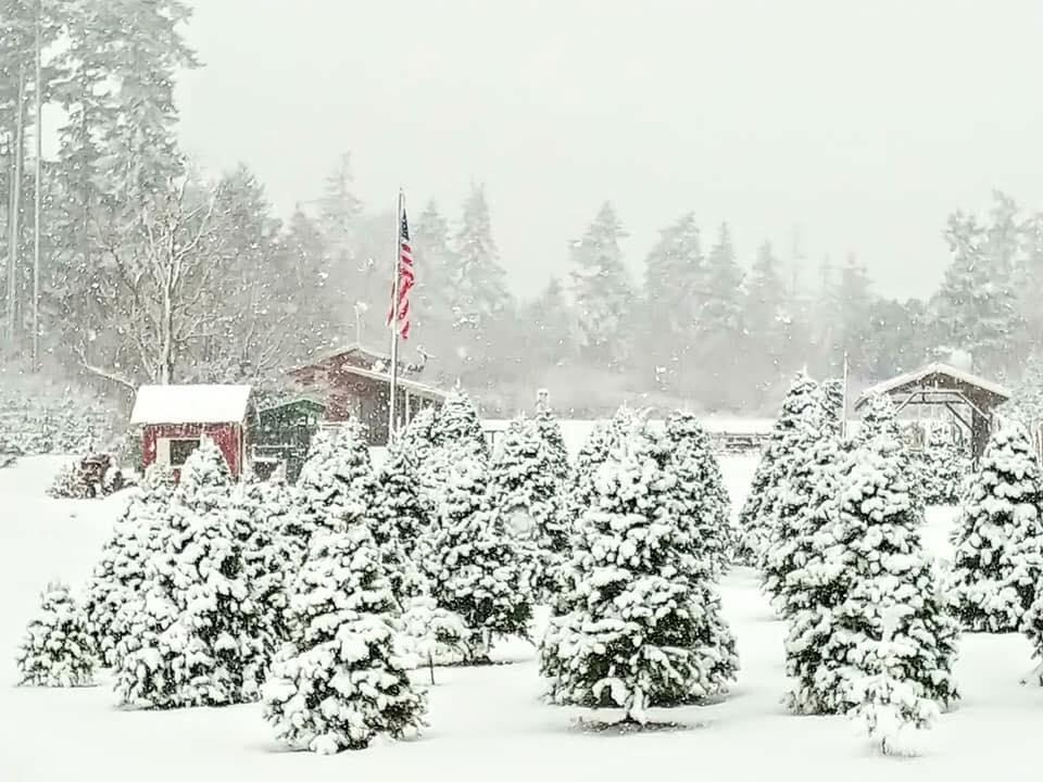 Christmas Tree Farms Skagit County Pacific Winds Farm 1