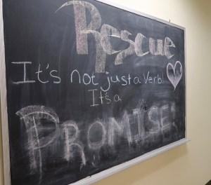 Humane Society of Skagit Valley Blackboard