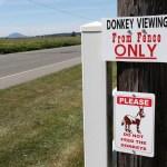 JF-Mini-Donkey-Ranch-Donkey-Viewing