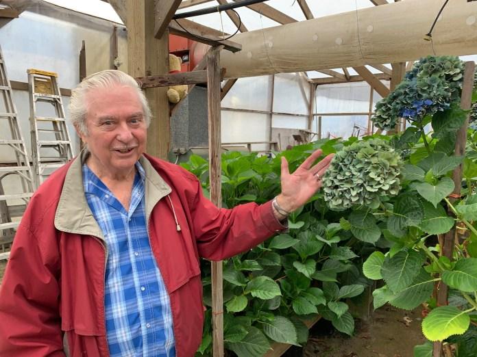 Jonkheer Greenhouses Ted-showing-hydrangeas