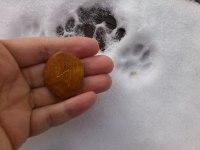 Sol-runan dragen för 17/2. 2012