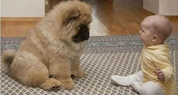 Когато казаха на родителите на парализираното бебенце да си вземат куче те недоумяваха защо. Но ето че чудото се случи!