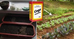 5 начина по които да използвате содата в градината