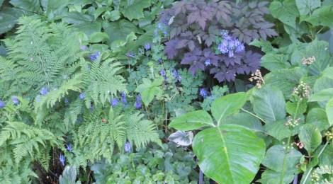 Bild från Pia Perssons trädgård. Privat foto.