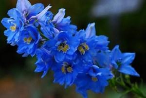 Цветочный-гороскоп-17