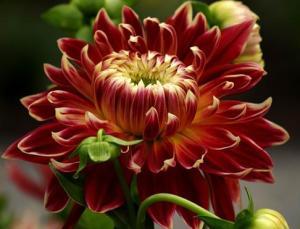 Цветочный-гороскоп-5