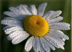 Цветочный-гороскоп-8