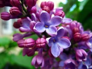 Цветочный-гороскоп-23