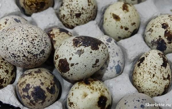 Перепелиные-яйца-Особенности-полезные-свойства-и-как-правильно-приготовить-2