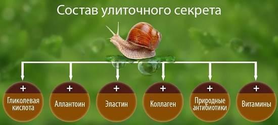 Улиточный-крем-Описание-особенности-свойства-и-применение-улиточного-крема-3