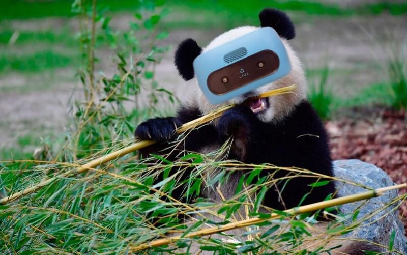 virtual reality panda