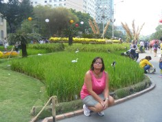 rice-field in the middle of Saigon