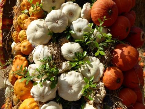 Pumpkin exhibition, Jim Thompsons farm