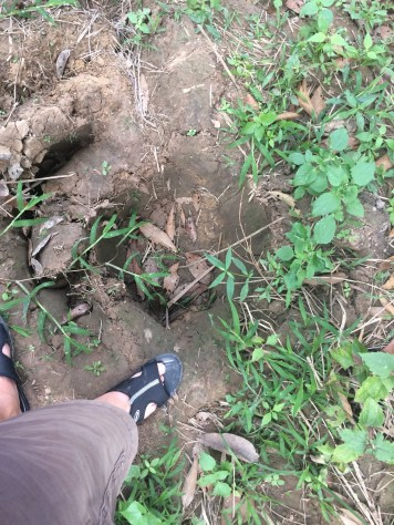Elephant tracks in Isaan