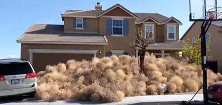 住宅前の回転草