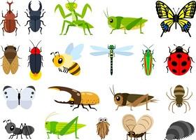 香川照之の昆虫デザイン