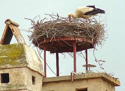 コウノトリの巣・屋上