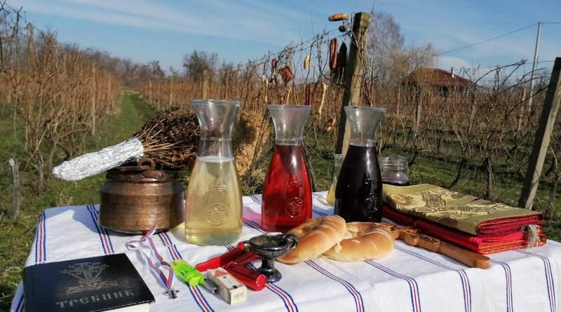 Sveti Trifun – zaštitnik vinograda i vinogradara