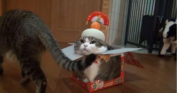 日本的猫-了解日本对猫的热情