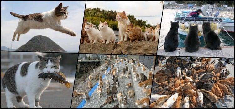 Conheça as ilhas dominadas por gatos no Japão - ilha dos gatos