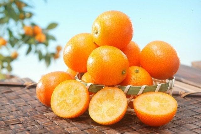 Frutas cítricas do Japão - Yuzu, Kinkan, Daidan e Sudachi - kinkan daidan yuzu mikan 1