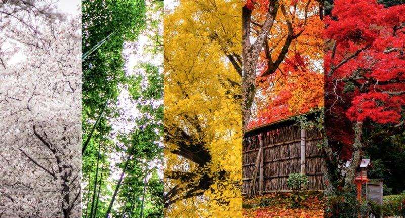 As 11 temporadas / estações / epocas japonesas